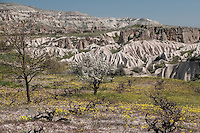 Fluted rock formations in Cappadocia testify to the power of erosion over time.