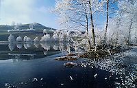 Frost on Birch trees, Finstersee, Zug, Switzerland