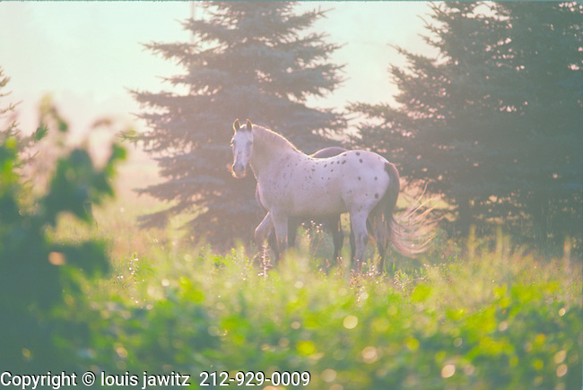 horse in field Ny state,misty moody