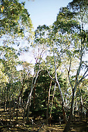 Image Ref: T005<br />