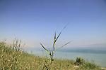 Ein Metzoke Dragot by the Dead Sea