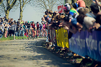 peloton in the Holleweg<br /> <br /> 101th Ronde Van Vlaanderen 2017 (1.UWT)<br /> 1day race: Antwerp › Oudenaarde - BEL (260km)