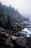 Coastal landscape, Maine