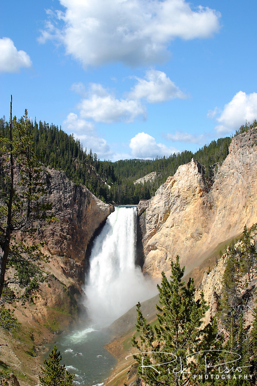 The Yellowstone River roars over Lower Falls on its way through the Grand Canyon of the Yellowstone. Every second 37,417 gallons of water plunges over the falls. The Lower Falls at 308 feet is the second, and taller, of a pair of falls along the Yellowstone River. One quarter mile upstream is the Upper Falls which is 109 feet in height. The Grand Canyon of the Yellowstone stretches for approximately 20 miles from Upper Falls to Tower Junction. The depth of the canyon ranges from 800 to 1200 feet.