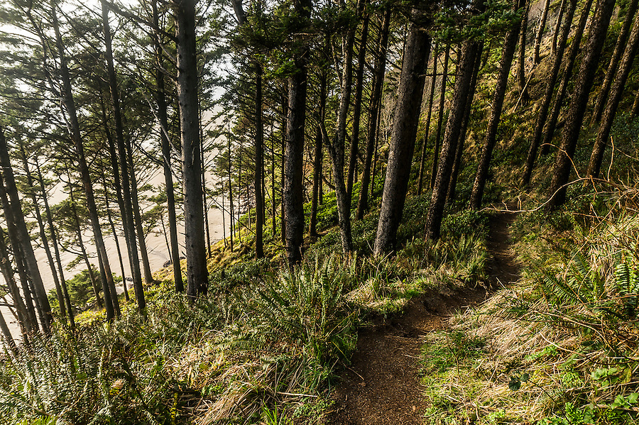 Trail down to the beach on the Oregon Coast, Oregon, United States.