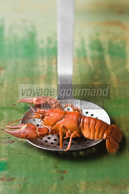 Europe/France/Rhône-Alpes/74/Haute Savoie/Lugrin: Les Ecrevisses du Lac Léman d'Eric Jacquier pécheur professionnel sur le Lac Léman - Stylisme : Valérie LHOMME