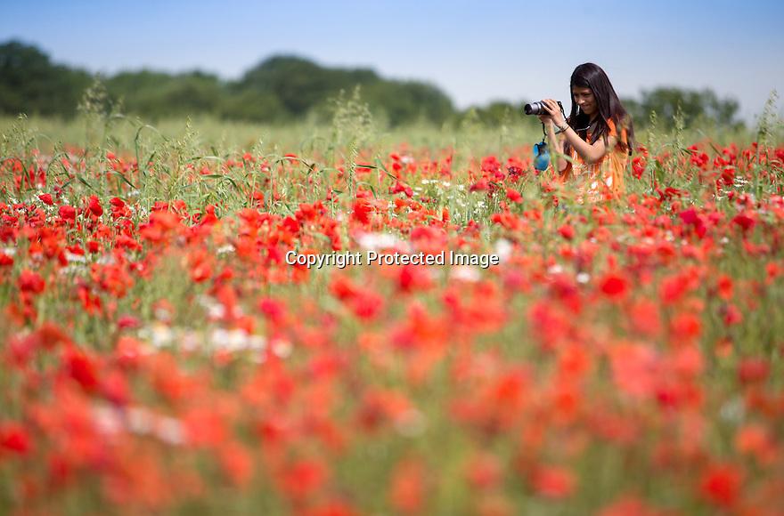 10/07/15<br /> <br /> Jess Smith Bointon photographs a field of poppies near Brailsford, Derbyshire.<br /> <br /> <br /> All Rights Reserved: F Stop Press Ltd. +44(0)1335 418629   www.fstoppress.com.