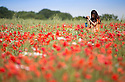 10/07/15<br /> <br /> Jess Smith Bointon photographs a field of poppies near Brailsford, Derbyshire.<br /> <br /> <br /> All Rights Reserved: F Stop Press Ltd. +44(0)1335 418629   www.fstoppress.com.