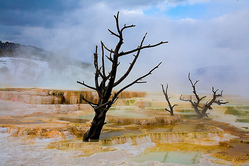 TRAVERTINE TERRACES CARRYING HIGH AMOUNTS OF DISSOLVED CALCIUM AND BACTERIA,MICROORGANISMS ARE FOUND AT MAMMOTH HOT SPRINGS IN YELLOWSTONE NATIONAL PARK,WYOMIMG