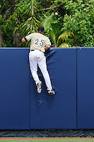 17 May 2008: Florida International right fielder Javier Sujo (25) climbs the outfield fence in an effort to prevent a home run in the top of the seventh inning of the Florida Atlantic 10-9 victory over FIU at University Park Stadium in Miami, Florida.