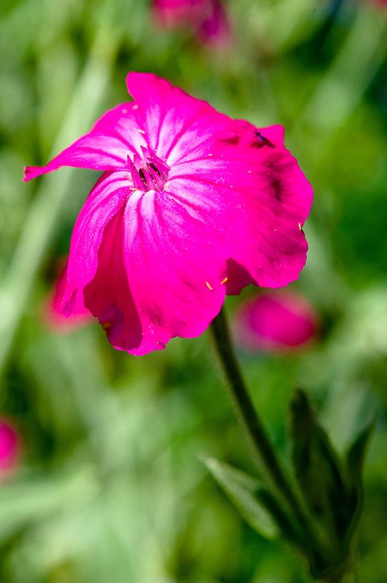 Purple flower macro closeup