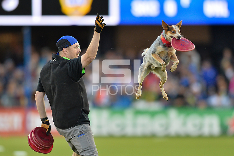 San Jose, CA - Saturday May 27, 2017: Halftime, dog during a Major League Soccer (MLS) match between the San Jose Earthquakes and the Los Angeles Galaxy at Avaya Stadium.