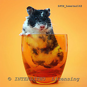Xavier, ANIMALS, photos+++++,SPCHHAMSTER142,#a# ,funny