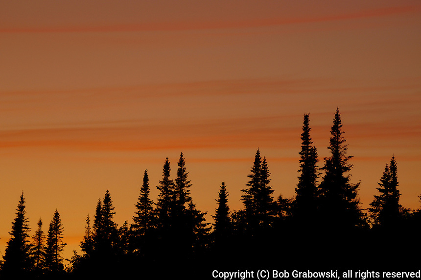 Beautiful Sunset Over Balsam Firs In The Adirondack Mountains Of New York State