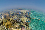 Split level coral reef shallows.Rowley Shoals, Western Australia