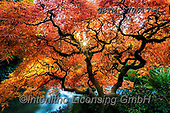 Tom Mackie, LANDSCAPES, LANDSCHAFTEN, PAISAJES, photos,+America, American, Americana, Kubota Garden, North America, Pacific Northwest, Seattle, Tom Mackie, USA, Washington, atmosphe+re, atmospheric, autumn, autumnal, colorful, colourful, dramatic outdoors, fall, horizontal, horizontals, inspiration, inspir+ational, inspire, japanese garden, japanese maple, landscape, landscapes, leaf, leaves, mood, moody, natural, nature, no peop+le, orange, peace, peaceful, red, reflecting, reflection, reflections, scenery, scenic, sea,America, American, Americana, Kub+,GBTM170617-1,#l#, EVERYDAY