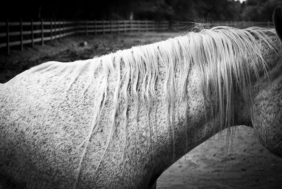 Black and white detail photo of the side view of a horse's mane.