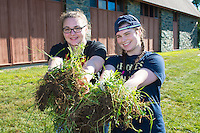 Abby Wasylean,'20, and Meghan McMahon,'20,  collect weeds as they volunteer at the Methodist Community Gardens in Middletown while taking part in the Salve Regina Service Plunge.