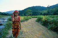 Woman in a rice field in Gorkha province Nepal..-The full text reportage is available on request in Word format
