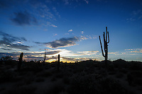 Mesa, Arizona. The last minutes of the sunset on a summer afternoon create a dramatic view of the sky over the Usery Mountain Regional Park, turning the park's vegetation into a landscape of silhouettes. Photo by Eduardo Barraza © 2015
