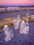 Mono Basin Scenic Area, CA  <br /> Tufa towers on the gravel beach of Mono Lake's south shore under a pastel colored sky at dusk