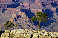 South rim view of Grand Canyon with a tree in Arizona, USA