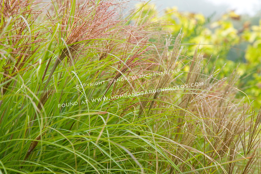 A fall foliage garden for Hearty ornamental grasses