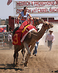 Meghan Burk races in the 54th International Camel Races in Virginia City, Nev., on Friday, Sept. 6, 2013.  <br /> Photo by Cathleen Allison