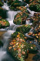 Spring along Oconaluftee River<br /> Bradly Fork Trail<br /> Great Smoky Mountains National Park<br /> North Carolina