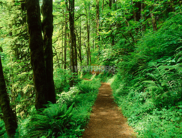 Forest Footpath in Silver Falls State Park