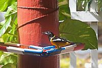 CT- Jaanchie's Bird Sanctuary Restaurant - Taxi Max Curacao Tour - during HAL Koningsdam