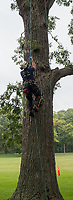Upwards of 40 competitors from across Ontario  took part in the annual Ontario Tree Climbing Championship at Canatara Park recently. The large burr oak surrounding the big field were ideal for the numerous events and challenges competitors displayed.