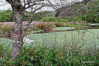 Fine art landscape nature scene of a tree and green foliage in foreground, framing a view of duckweed on a still pond with grasses in the background, along Muddy Hollow Trail in the Limantour Beach area, Point Reyes National Seashore, notable as a recovering grove of Bishop Pines after a devastating fire about 5 to 10 years ago.
