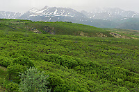 Dempster Highway in the Tombstone Range (Ogilvie Mountains)<br /> Dempster Highway<br /> Yukon<br /> Canada