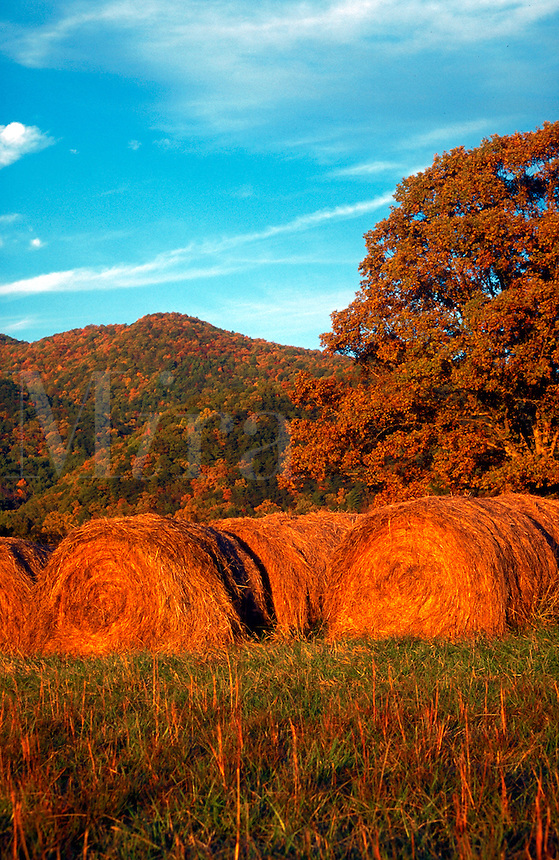 Hay bales in an autumn colors landscape.