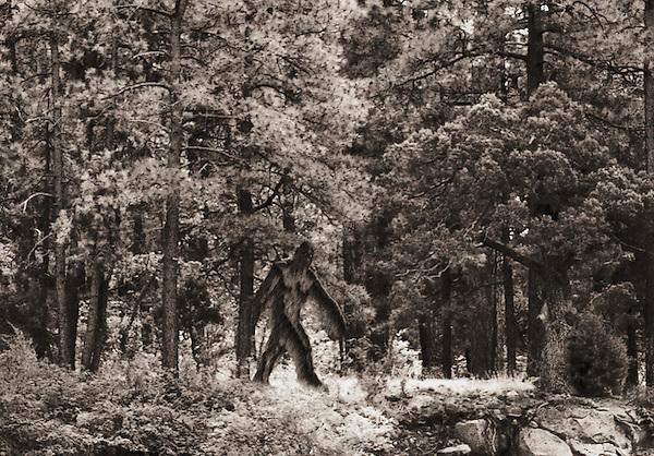 Bigfoot (Sasquatch) in forest