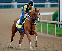 LOUISVILLE, KENTUCKY - APRIL 30: Hence, owned by Calumet Farm and trained by Steve Asmussen, exercises in preparation for the Kentucky Derby at Churchill Downs on April 30, 2017 in Louisville, Kentucky. (Photo by Jon Durr/Eclipse Sportswire/Getty Images)