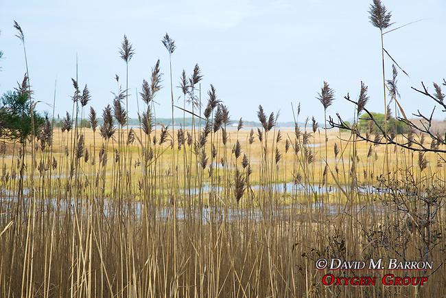 Salt Marsh Overlook, Welfleet Bay Wildlife Sanctuary, Audubon
