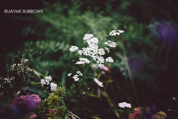 White flowers in a garden with shallow depth of field.