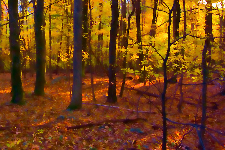 Striking contrasted colors found in the Shenandoah forest in autumn