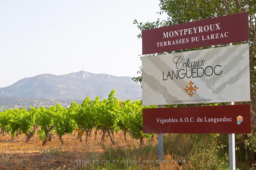 Montpeyroux, Terrasses de Larzac. Montpeyroux. Languedoc. France. Europe. Vineyard. Mountains in the background. Mont Saint Baudille.