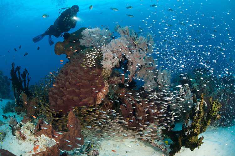 A colourful reef scene at the entrance to the dive site known as the Cauldron, North Komodo