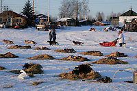 Tuesday March 6, 2007   Paul Gebhart leaves the Nikolai checkpoint on Tuesday as other dogs rest in the sun on their straw.