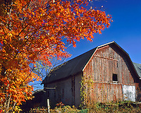 Barn in Autumn Morning Light, Finger Lakes Region, New York