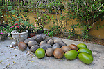 Pile of higuera fruit on the ground. Some green some dried.