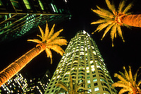 Frog perspective of Skyscrapers and palm trees at night in Los Angeles, California, USA