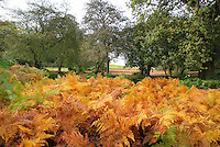 Bedfordshire, UK -  Autumn Colours in and around Ampthill Park, Bedfordshire, UK. October 20th 2012..Photo by Keith Mayhew