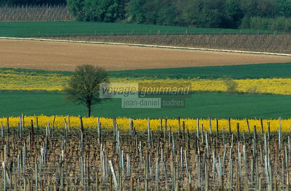 Europe/France/Poitou-Charentes/16/Charente/Env de Rouillac: Vignoble de Cognac et colza en fleur