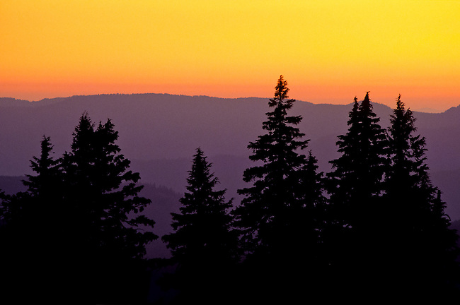 Sunset behind trees in Crater Lake national park in Oregon, USA