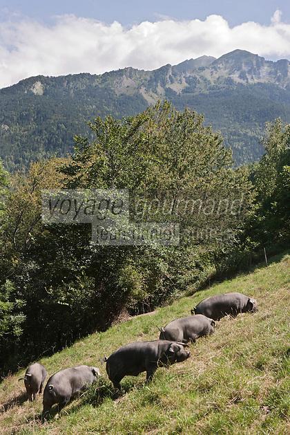 Europe/France/Midi-Pyrénées/65/Hautes-Pyrénées/Vignec: Elevage porcin de porcs noirs de Bigorre de la Ferme Vignécoise  - Vallée d'Aure